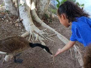 girl feeding a goose